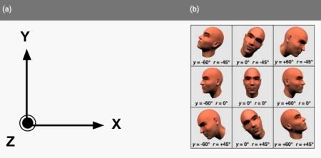 Orientamento del viso
