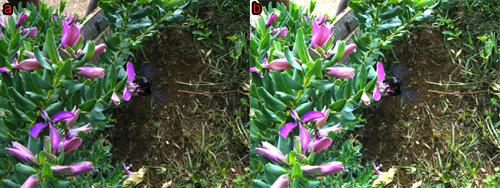 esempi di foto dall'esposizione corretta e leggermente sovraesposta dopo la correzione