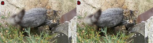 esempi di foto dopo la correzione della luminosità e del contrasto, rispettivamente