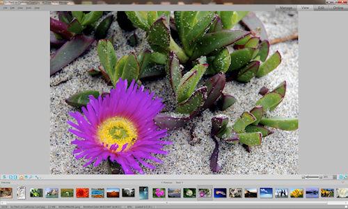 ACDSee Photo Manager: Interfaccia utente - Sezione View