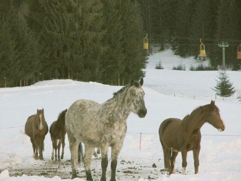 Immagine iniziale: cavalli sulla neve