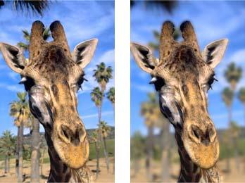 Immagine iniziale: giraffa su sfondo di palme
