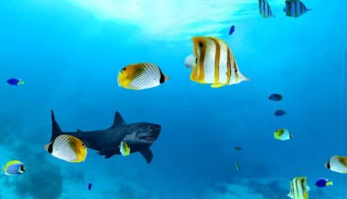 Screenshot della demo: acquario 3D realizzato con Papervision