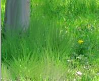 Stesura colore per l'erba